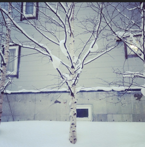 There is something so pretty and delicate about a snow dusted tree