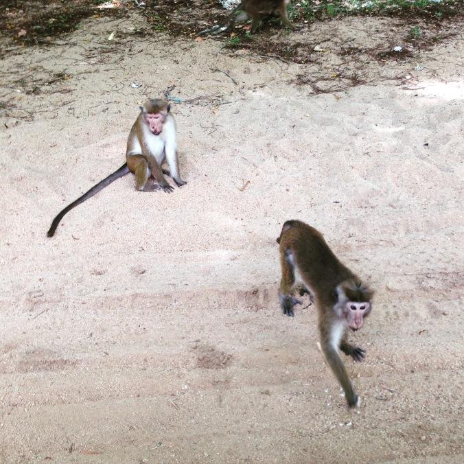 Cheeky Monkeys eating tea cake