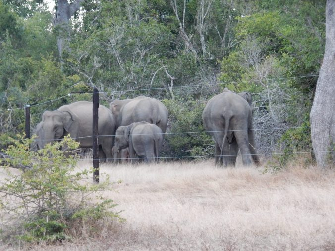Elephant family roaming freely.
