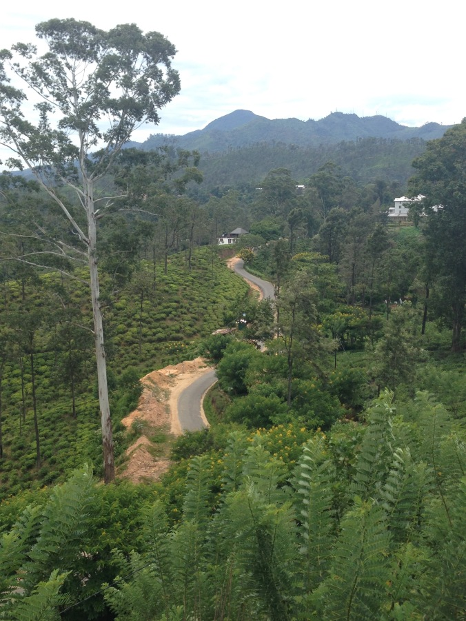 The windy road to the tea factory